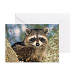 Raccoon Up a Tree Greeting Card
