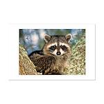 Raccoon Up a Tree Mini Poster Print