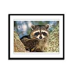 Raccoon Up a Tree Framed Panel Print