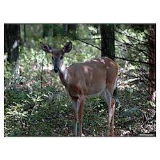 Deer 10 Poster