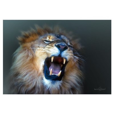 Lion Portrait Framed Print
