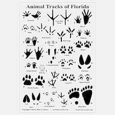 Animal Tracks Florida Off-white