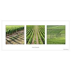 Vineyards in line Poster