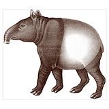 Malayan tapir Posters