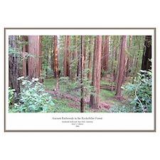 California Ancient Redwoods