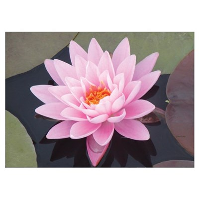 Water Lily - 1st of 4 in the Water Lily Series Poster