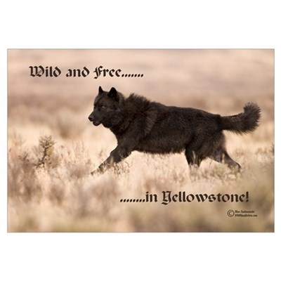 """Black Wolf"" Canvas Art"
