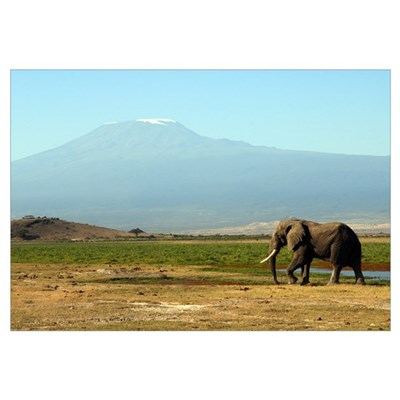 African Elephant at Mt. Kilimanjaro Canvas Art