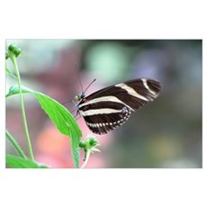 Helaine's Butterfly Poster