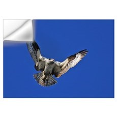 Osprey Wall Decal