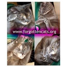 Forgotten Cats Poster