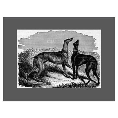 Two Greyhounds Framed Print