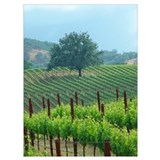 California landscape Wrapped Canvas Art