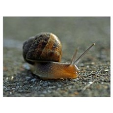 Snail 1 Poster