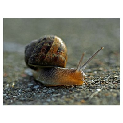 Snail 1 Canvas Art