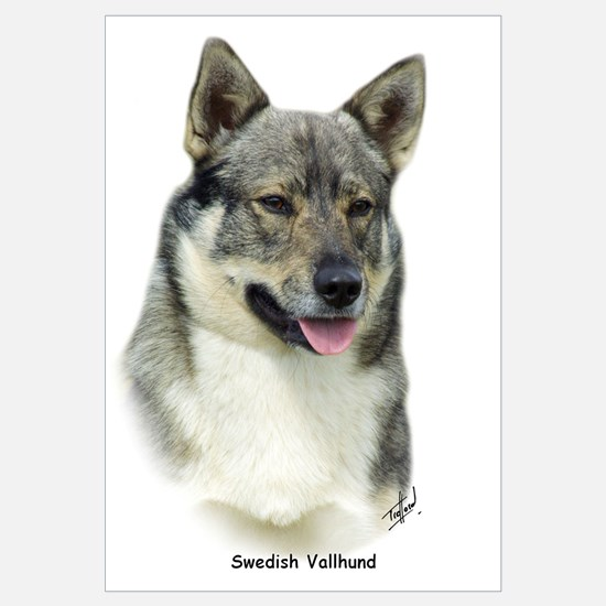 Swedish Vallhund 9K1D-14