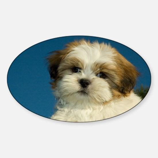 Shih Tzu puppy Sticker (Oval)