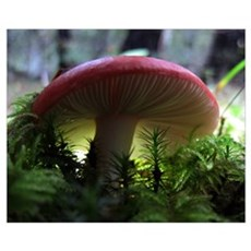 Red Mushroom in Forest Canvas Art