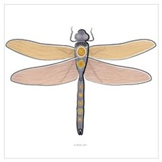 Dragonfly (13x16) Poster