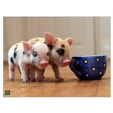 Pig Wrapped Canvas Art