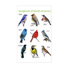 Songbirds of North America Decal