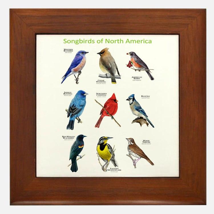 Songbirds of North America Framed Tile