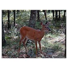Deer 7 Poster