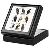Owls of north america Square Keepsake Boxes