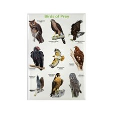 Northern American Birds of Prey Rectangle Magnet