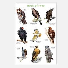Northern American Birds of Prey Postcards (Package