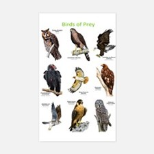 Northern American Birds of Prey Decal