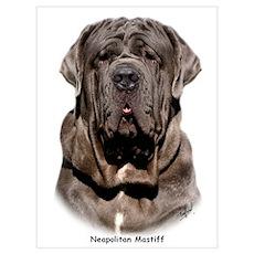 Neapolitan Mastiff 9Y393D-047 Poster