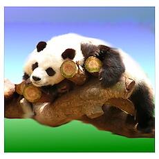 Panda Bear play Poster