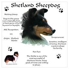 Sheltie 4 Poster