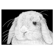 Lop Rabbit Framed Print