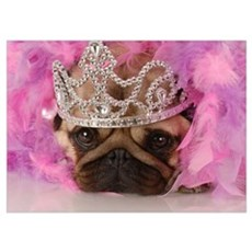Queen Pug Poster