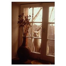 Taos, NM, Cat in Window
