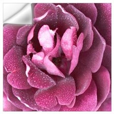 Magenta Rose 01 Wall Decal