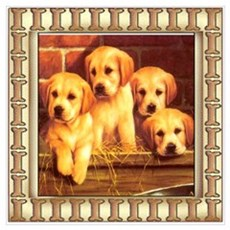Yellow Lab Puppies Poster