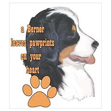 Berner pawprints Poster