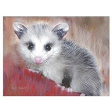opossum Canvas Art