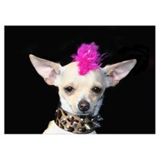 Chihuahua Punk Poster