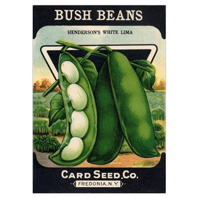 Lima Beans antique seed packe Poster
