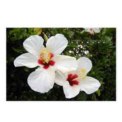 Beauty is Everywhere Postcards (Package of 8)