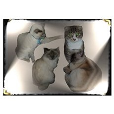cat tails cats Poster