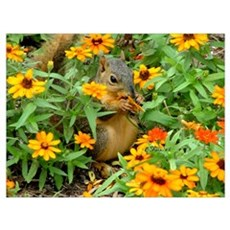 3774 Squirrel In Marigolds Poster