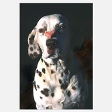Dalmatian Lonely Heart