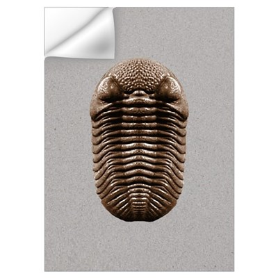 Trilobite Wall Decal