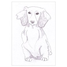 : Longhaired Dachshund Poster
