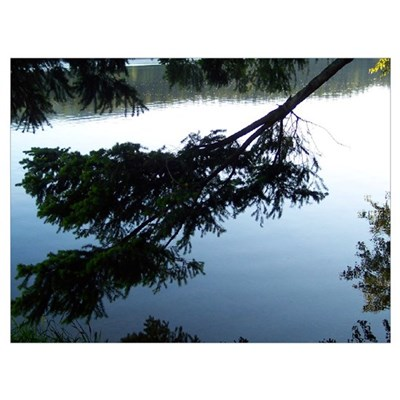 Tree Reflected In Lake Poster